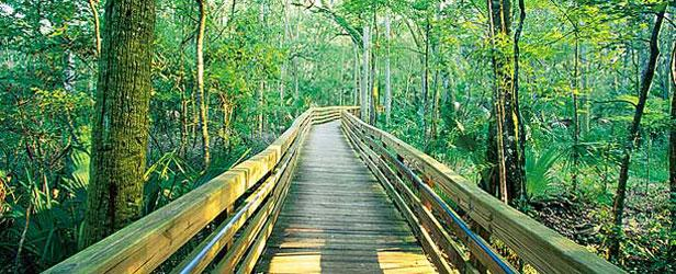 Apalachicola_National_Forest.jpg