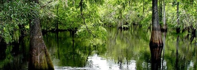 withlacoochee_river_2.jpg