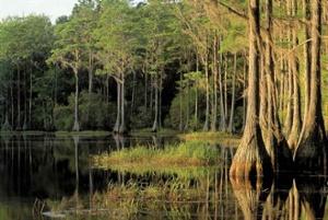 5965-swamp-web.jpg