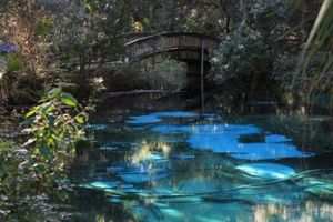 Juniper-Springs-Florida-1.jpg