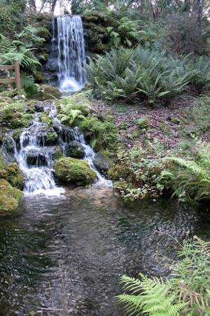 Rainbow_Springs_State_Park_Waterfall.png