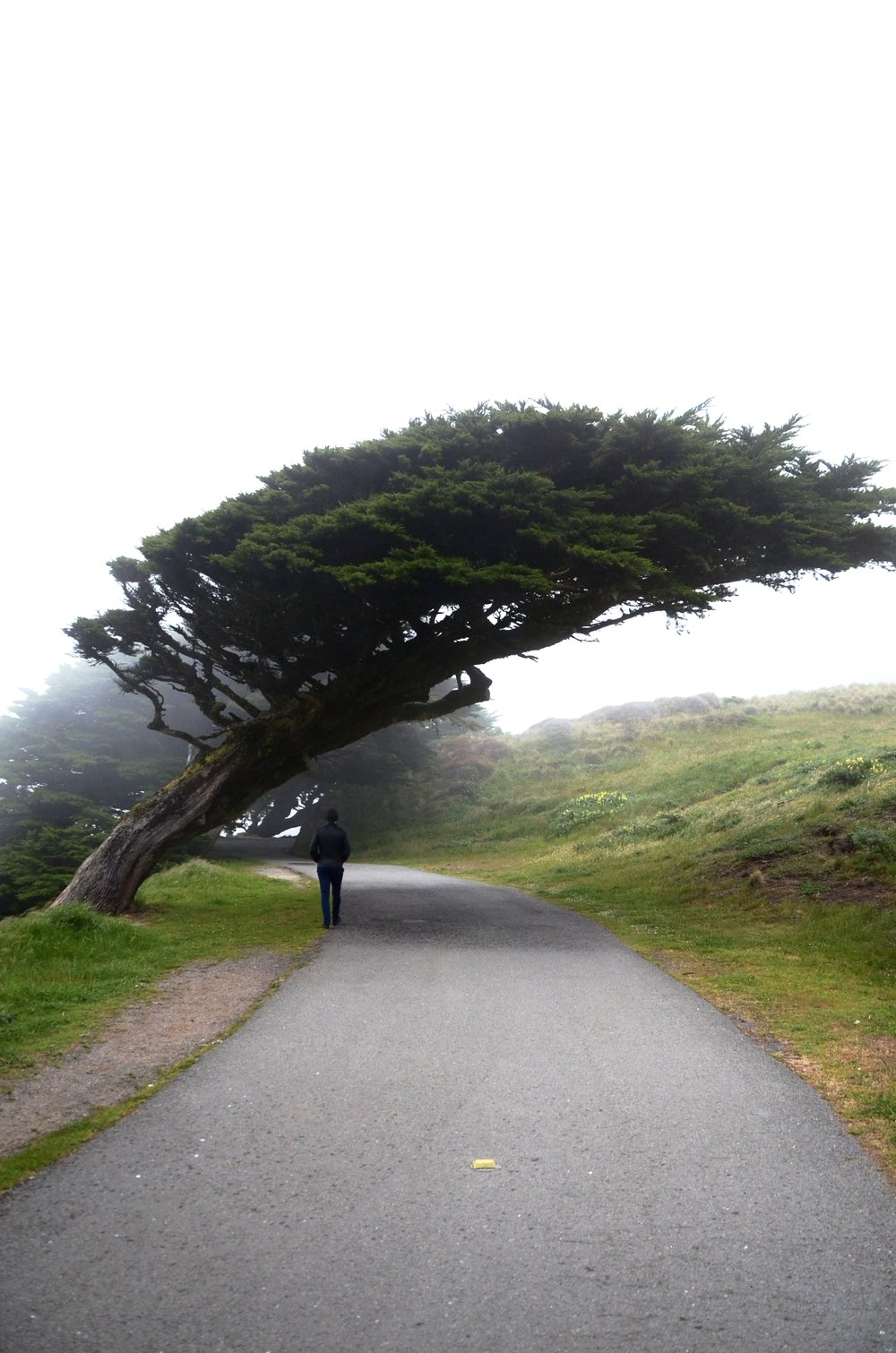 Paul walking near the coolest tree