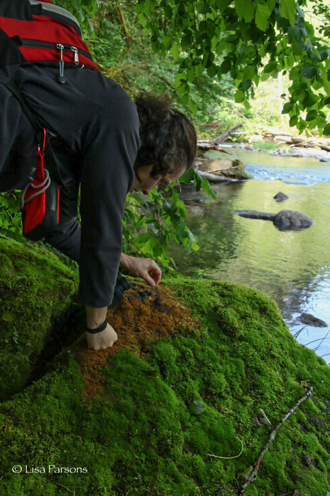 Michelle Inspecting Otter Scat