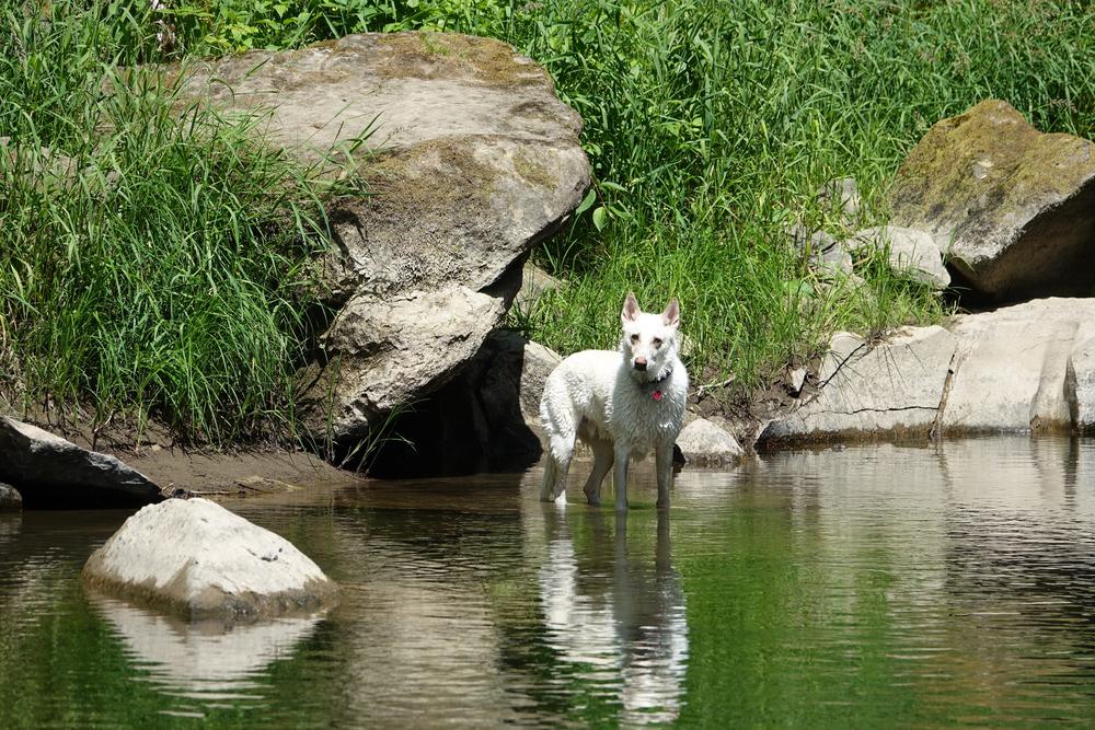 Adventure Dog 1
