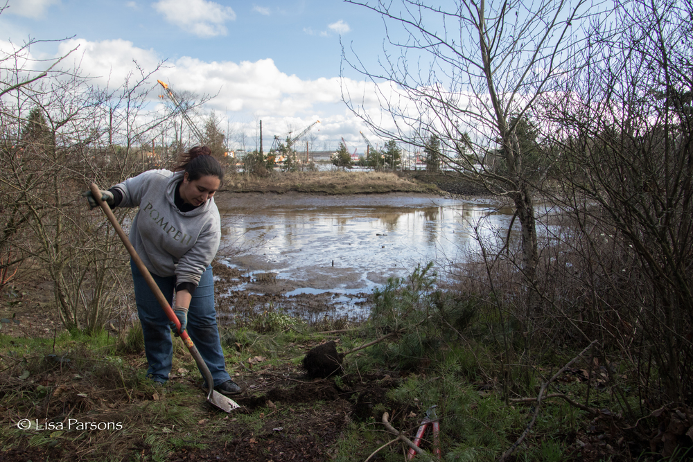 Volunteer planting native plants along the Duwamish near West Seattle.