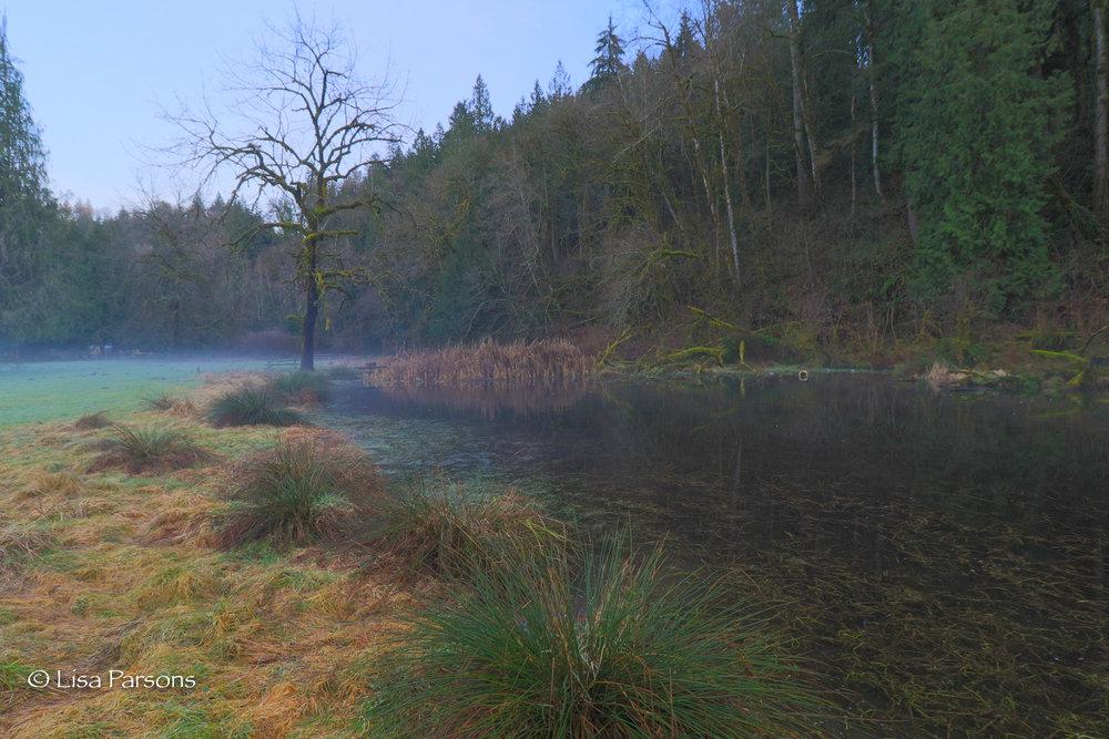 Growing Wetland