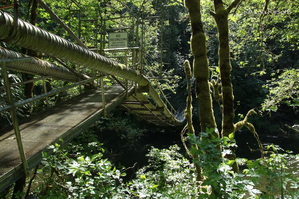 suspension bridge-1.jpg