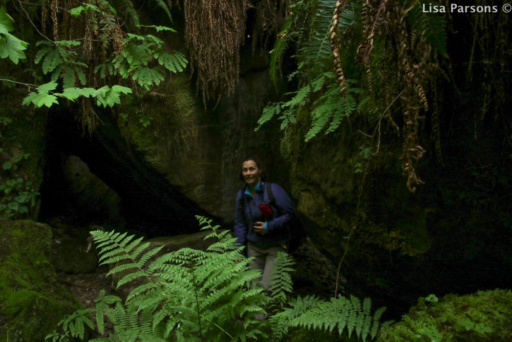 Giant Ferns