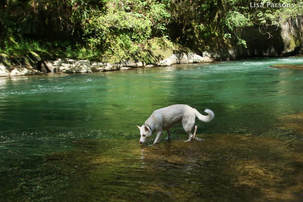White Dog on the Sanstone Ledge