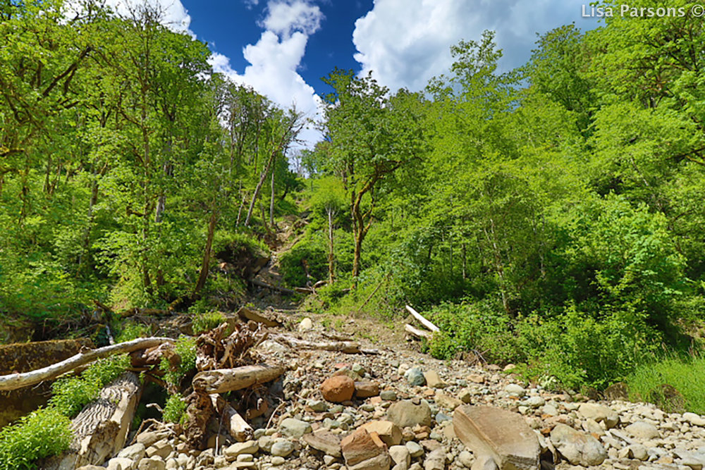 A Landslide Changes the Shoreline and the Flow of the River