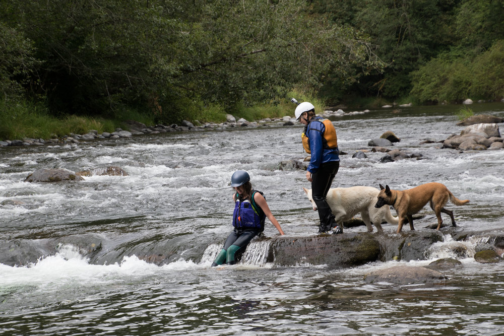 In 2016 I hiked the entire 14 mile long Green River Gorge from the Headworks below the Howard Hanson dam to Flaming Geyser State Park. Here I am hiking (and swimming) a section of the river with my niece and two dogs.