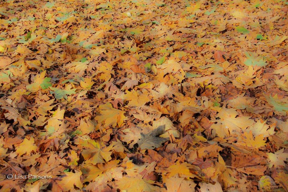 Autumn at Kanaskat State Park