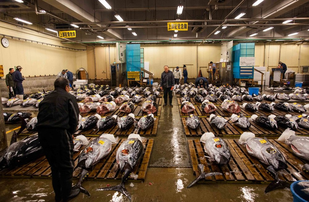 Tsukiji's last workers by Rob Bain & Far Features | Far Features media production company | Japan | largest fish market | photo essay