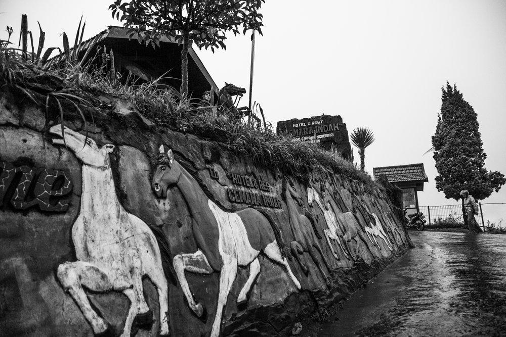 Volcano Horses by Fraser Morton38.jpg