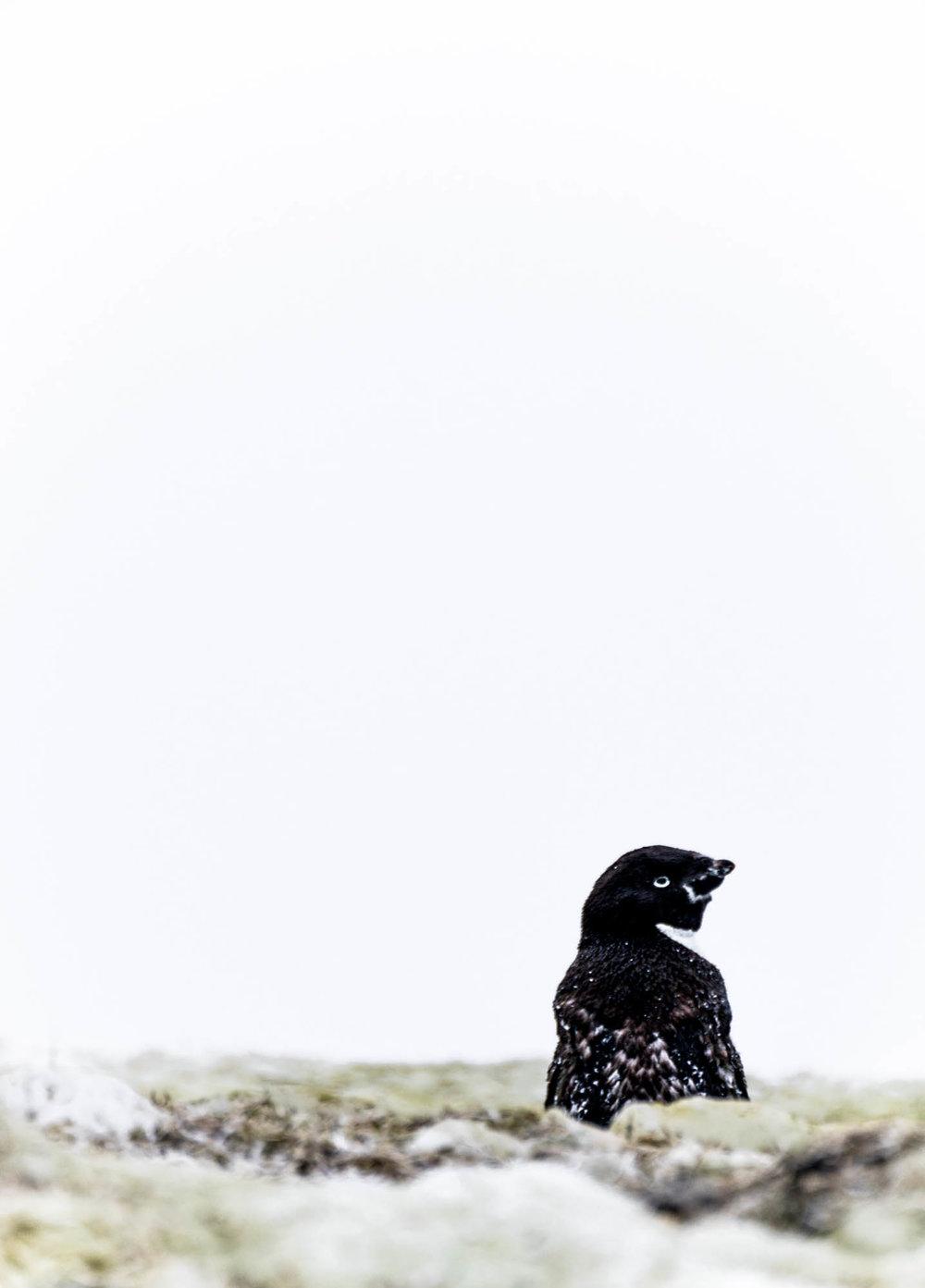 Antarctica Copyright Fraser Morton_DSC6309.jpg