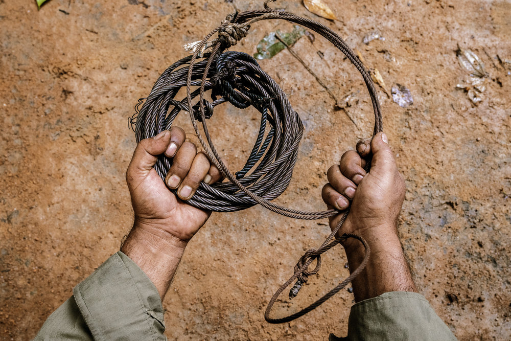 A ranger holds a poacher's snare trap used to capture tigers.