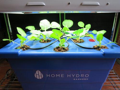 SHOP Home Hydro Gardens