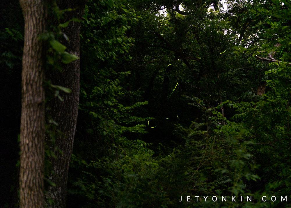 JetYonkin_Fireflies.jpg