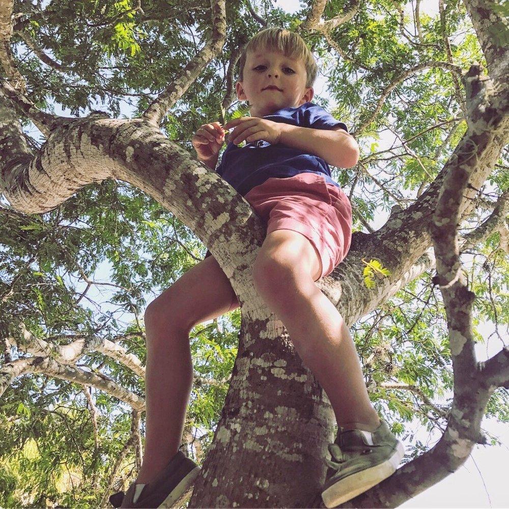 Tree Climbing Turner.jpg