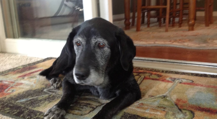 Our beloved Lilly, 1999~2014