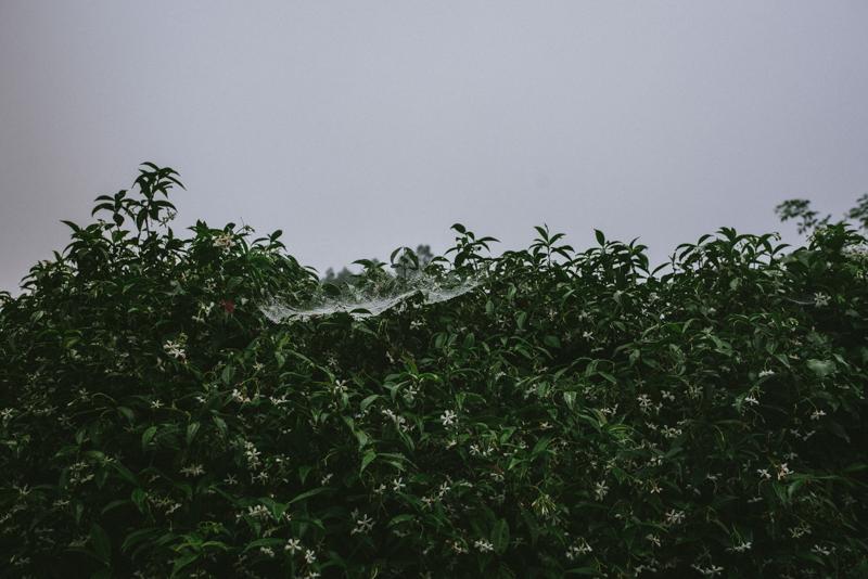 IRENEYWOLFFBaja-125.jpg