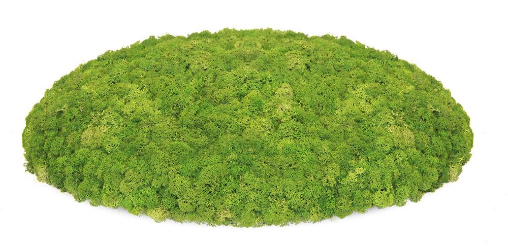 Nordgröna Mosstafel - 100% natürlicher Schallabsorber - CONVEX Circle