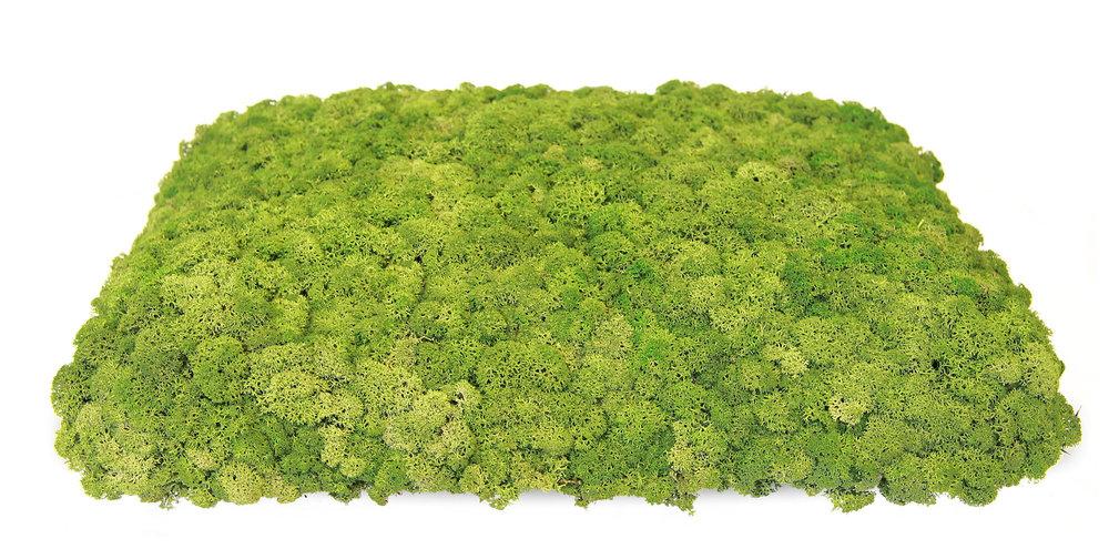Nordgröna Mosstafel - 100% natürlicher Schallabsorber - CONVEX Square