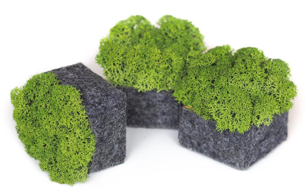 Nordgröna Mosstafel - 100% natürlicher Schallabsorber - CONVEX Pix