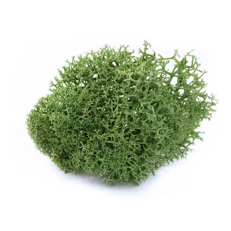Nordgröna Moos