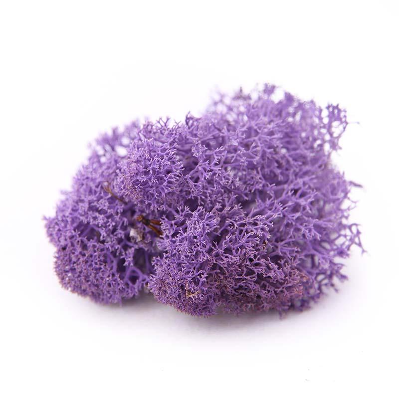 Nordgröna Purple