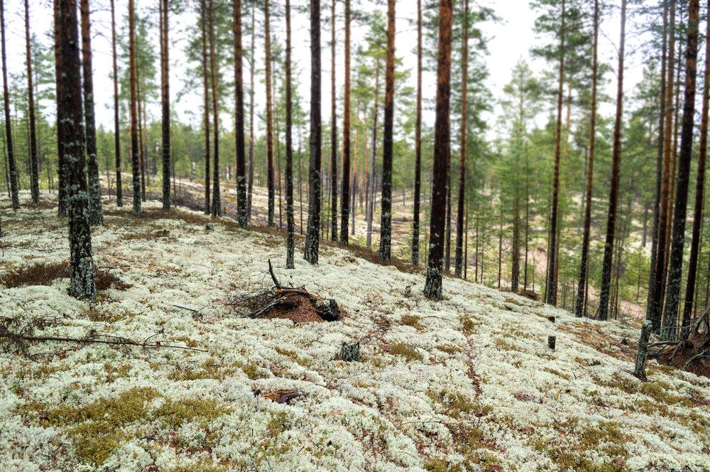 Nordgröna Moostafel Rentiermoos Wandabsorber Bellton Raumakustik10.jpg