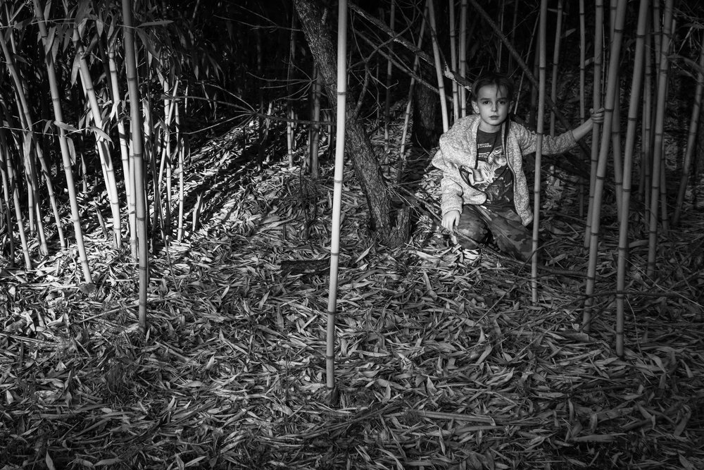 In the bamboo.
