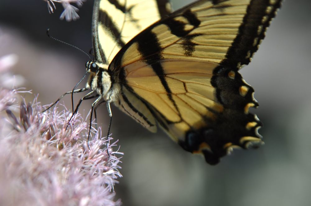 minnesota_butterfly_gardens_landscapes.jpg