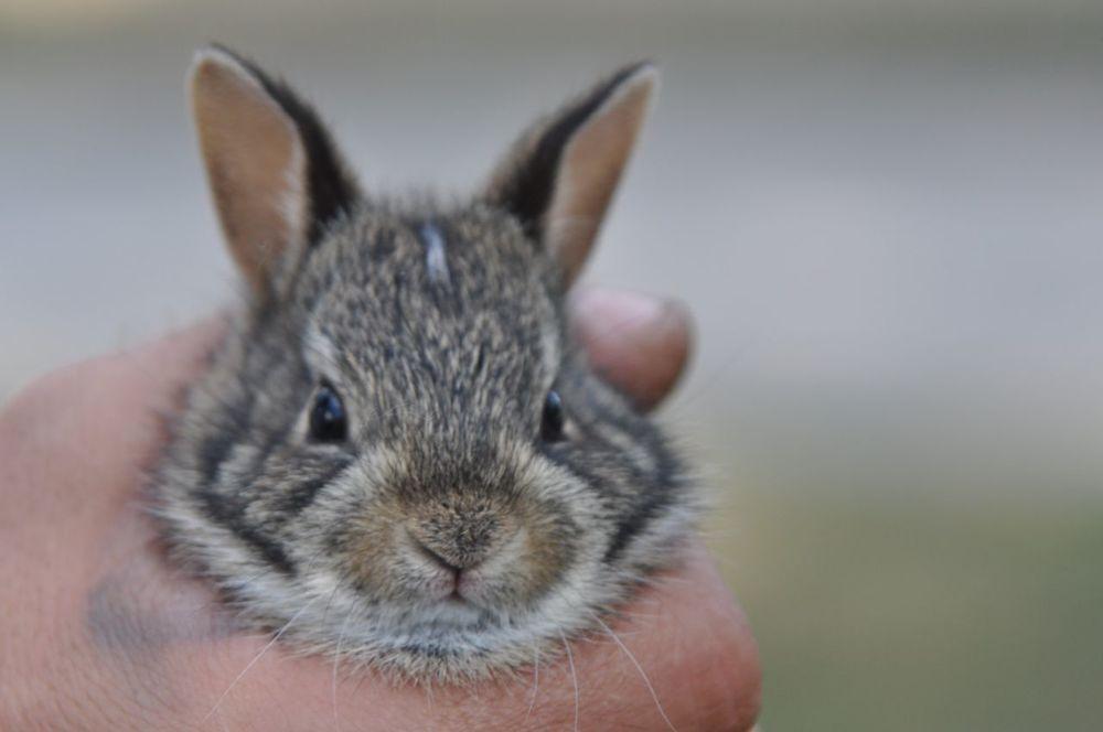 holding_a_bunny.jpg