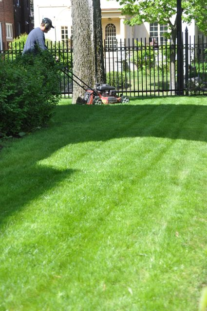 organic_lawn_care_service_minneapolis.jpg