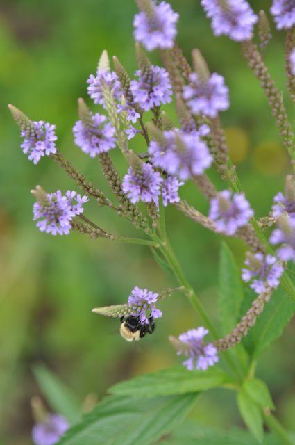 habitat_gardens.jpg