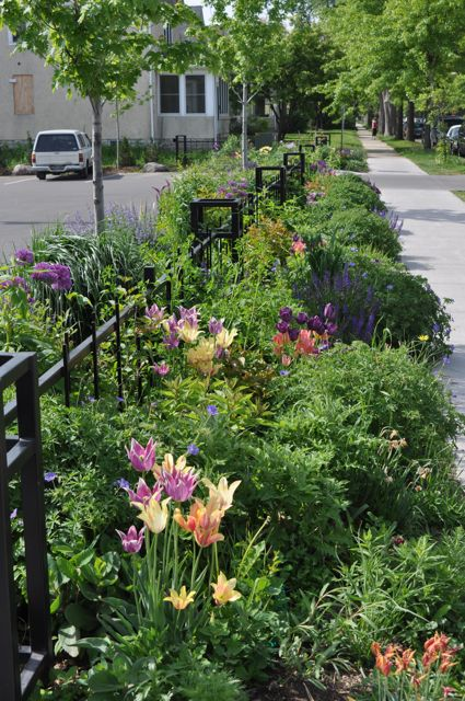 organic_flower_garden.jpg