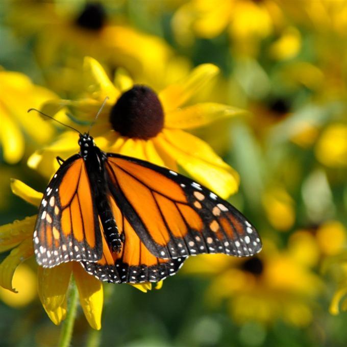 pollinator habitat