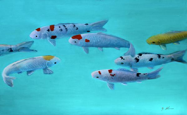 Aqua Koi