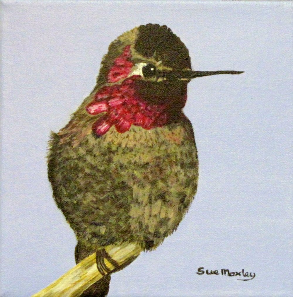 The Anna Humming Bird
