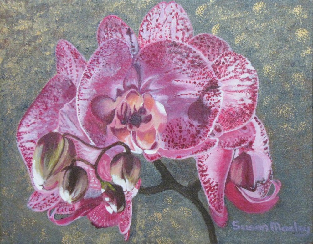 Phalaenopsis Orchid (Moth Orchid)