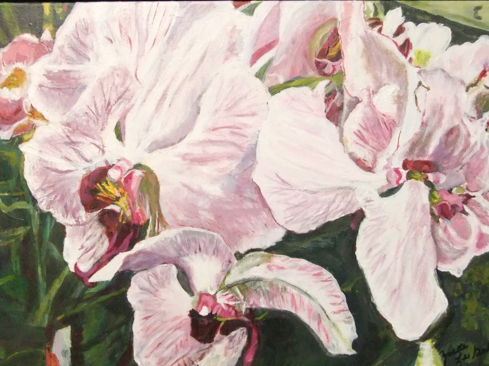 Pink Royalty. Orchid Study
