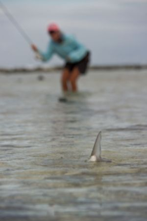 Fly Fisher casting a fly to a tailing bonefish in Belize