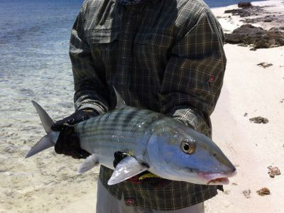 Big Belize Bonefish caught at Turneffe Flats while fly fishing
