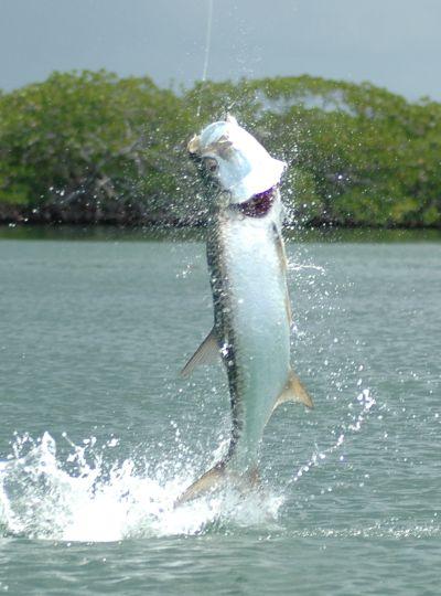 Fishing for tarpon on Turneffe Atoll.