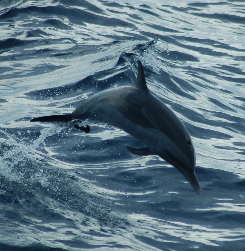Belize dolphin eco-tours at Turneffe Atoll