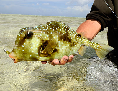 Belize fly fishing flats