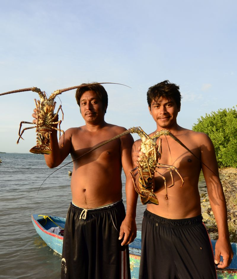 spiny lobster fisherman at Turneffe Atoll
