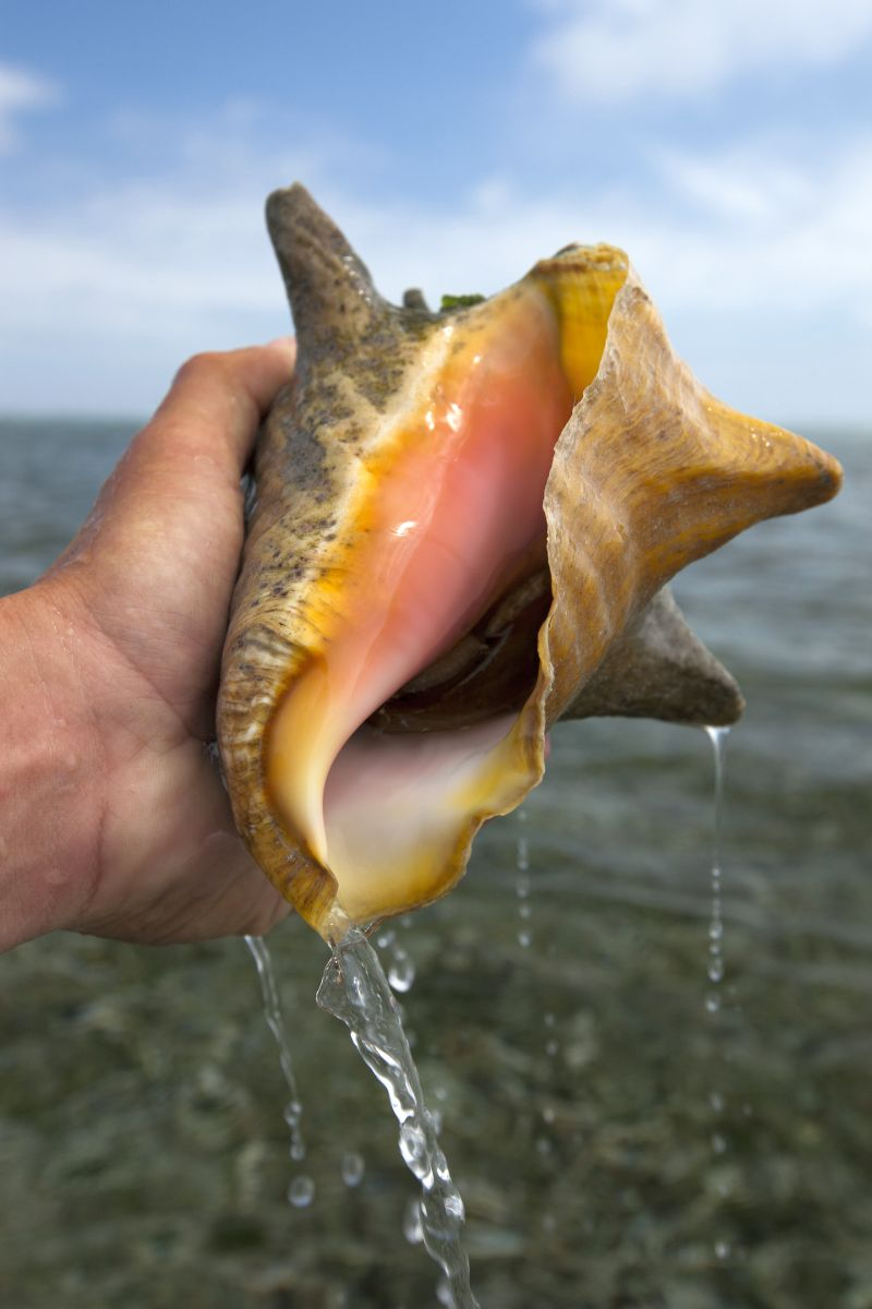 conch fishing in Belize