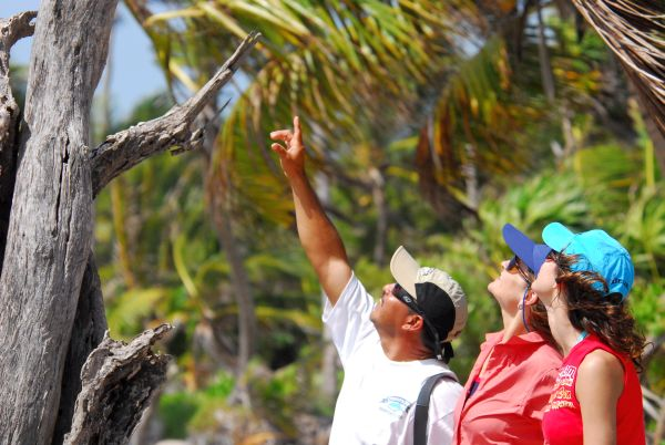 Birding - Eco tours in Belize on Turneffe Atoll